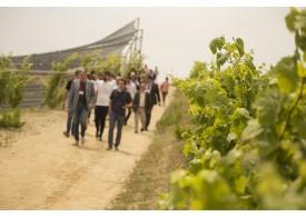 ACO Arquitectos entre viñedos
